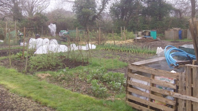 Looking back across a wet allotment