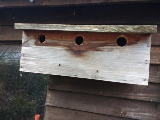 """""""Sparrow"""" Box"""