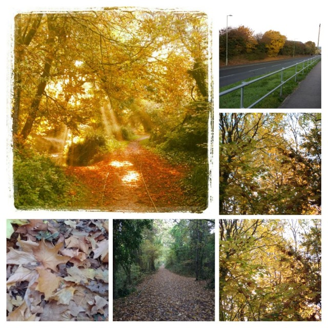 Autumn Photo Collage